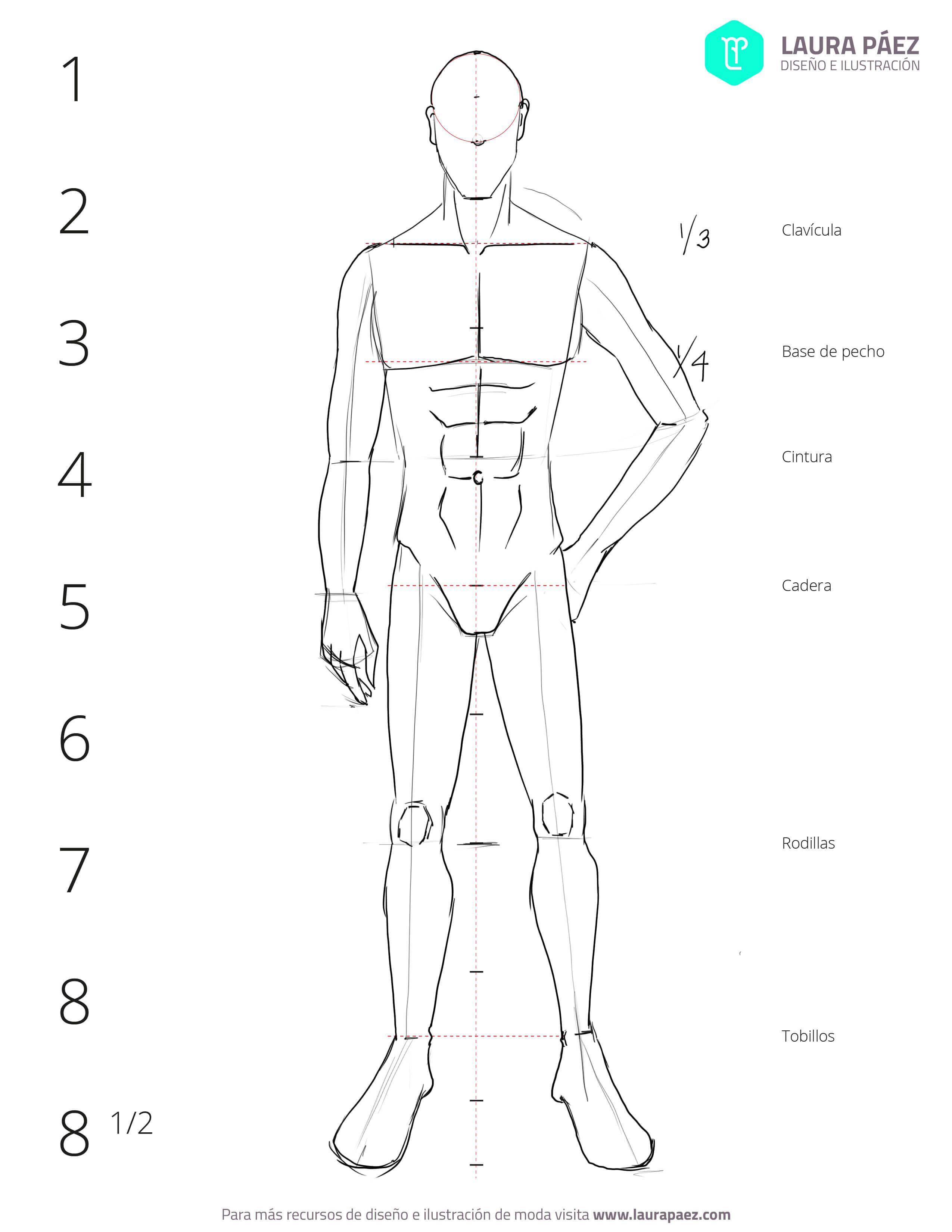 Cómo dibujar un figurín masculino: proporciones - Laura Páez